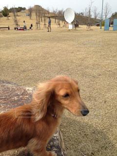 犬の写真・画像素材[452991]
