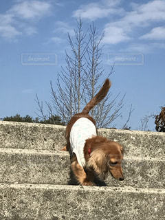 犬の写真・画像素材[453983]