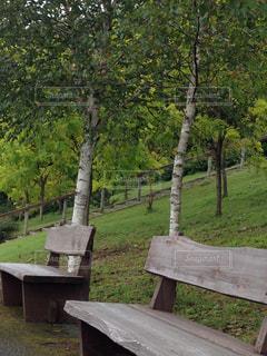 公園の写真・画像素材[454005]