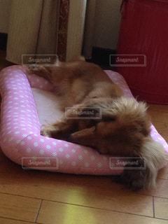 犬の写真・画像素材[473753]