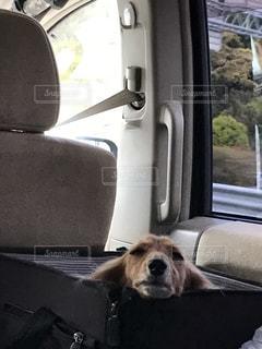 犬の写真・画像素材[473767]