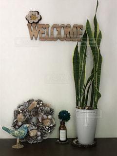 インテリア,リース,観葉植物,青い鳥,トラのしっぽ