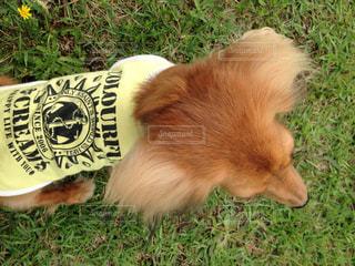 公園で黄昏る犬の写真・画像素材[990281]