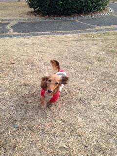 走る犬の写真・画像素材[990309]