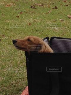 草の中に座っている犬の写真・画像素材[990335]