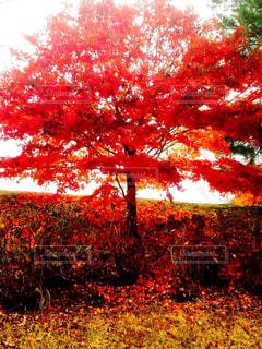 秋の写真・画像素材[244884]