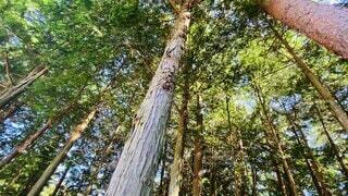 自然,空,夏,森林,木,屋外,森,林,景色,樹木,夏休み,初夏,森林浴,ジャングル,草木,動画,鳥のさえずり,ガムの木