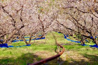 公園の木の写真・画像素材[1044385]