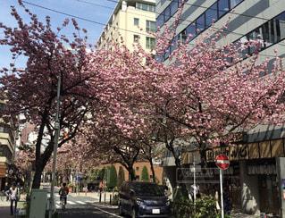 春の写真・画像素材[401649]