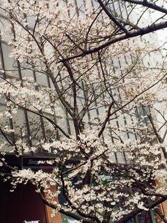 春の写真・画像素材[401663]