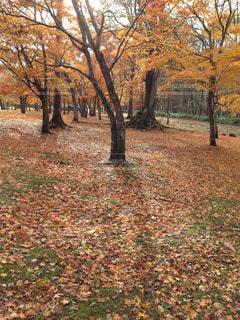 公園の写真・画像素材[246207]
