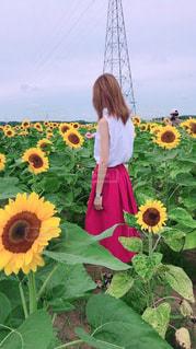 花と私 - No.903895