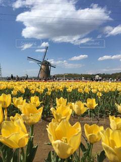 水と黄色い花で一杯の花瓶の写真・画像素材[1131090]
