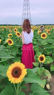 野原の黄色い花の中の人の写真・画像素材[2173598]
