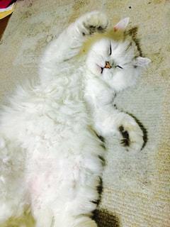 猫の写真・画像素材[241506]