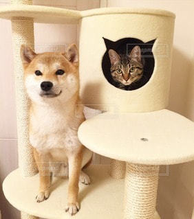 No.11318 犬