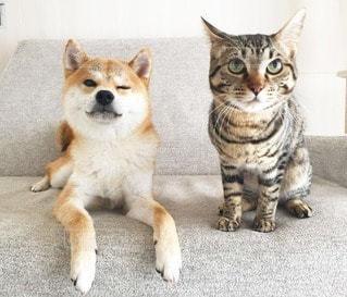No.11323 犬