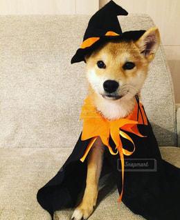 No.236398 犬