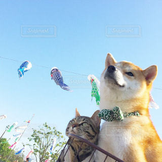 No.480571 犬
