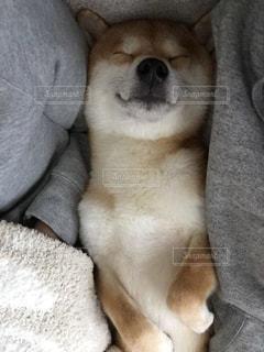 犬 - No.480581