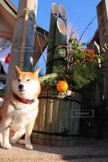 犬の写真・画像素材[303082]