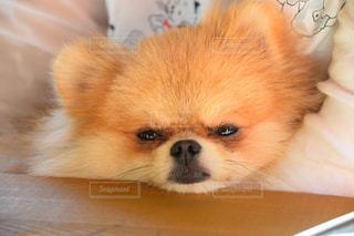 犬 - No.242693