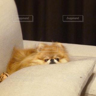 犬の写真・画像素材[242726]