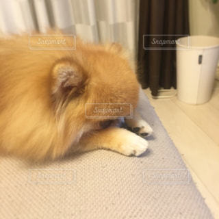 No.242727 犬