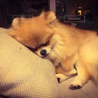犬の写真・画像素材[242728]