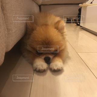 犬 - No.242729