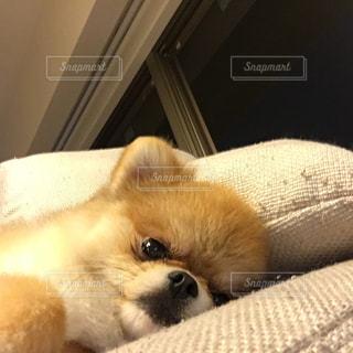 No.242731 犬