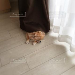 No.242734 犬