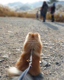 犬の写真・画像素材[245774]