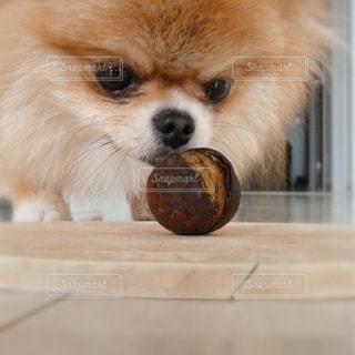 犬の写真・画像素材[245775]
