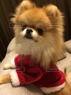 犬の写真・画像素材[268400]
