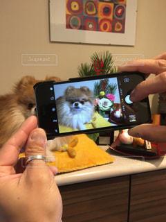 犬の写真・画像素材[298436]