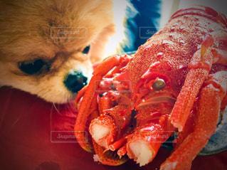 犬の写真・画像素材[298443]