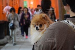 犬 - No.310056