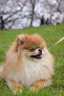 犬 - No.405344