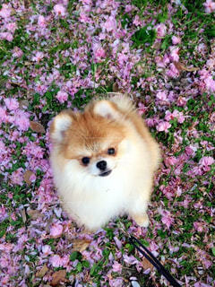 犬の写真・画像素材[405347]