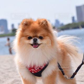 犬 - No.477748