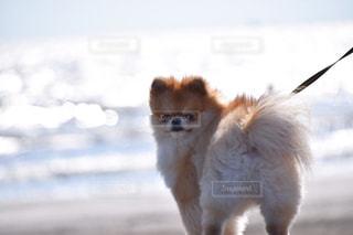 犬 - No.477751