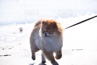 犬 - No.477752