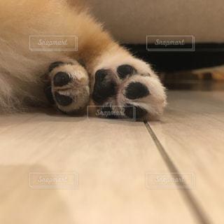 犬 - No.481283