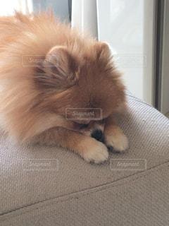 犬 - No.481288