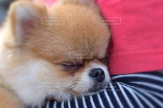 犬 - No.481290
