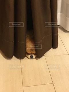 犬の写真・画像素材[481294]