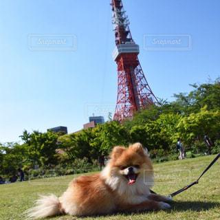 犬の写真・画像素材[591452]