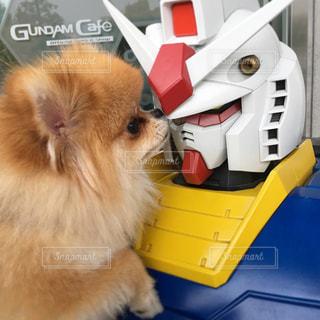 犬の写真・画像素材[591456]