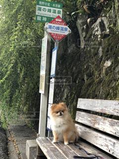 バス待ちの写真・画像素材[1397901]